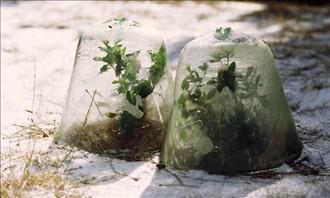 winter plants resized 600