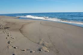 beach resized 600